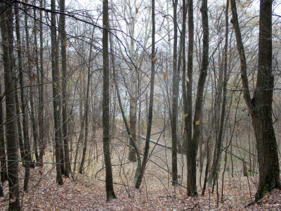 Прогулка по лесу 29 октября 2016 (фото)
